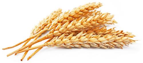 wheat germ.